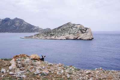 A curious observer on the way to Aegiali, Amorgos